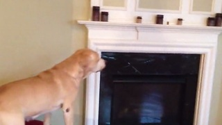 Clever dog finds hidden treats around the house - Video