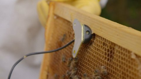 Artificial Intelligence Might Help Save America's Bees