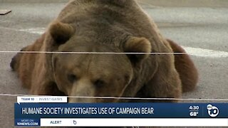 Investigation into John Cox's use of bear during campaign stop