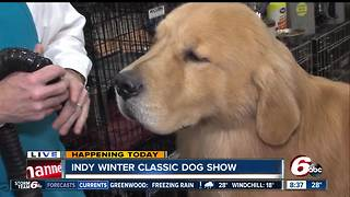 26th Annual Indy Winter Classic Dog Show - Video