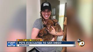 EXCLUSIVE: pets evacuated from Texas to San Diego - Video