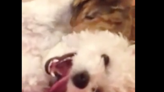 Kitty LOVES her puppy  - Video
