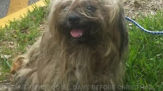 Miracle found underneath matted coat - Video
