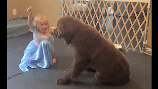 Watch this super cute puppy training session