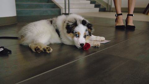 This Adorable Spoof Of 'The Bachelor' Promotes Dog Adoption