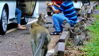 Monkey And Car And Like Eat Food People Give Them