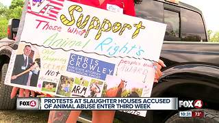 Animal activists say their not backing down - Video