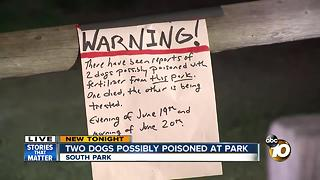 Two dogs possibly poisoned at park - Video