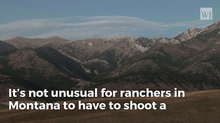 Rancher Sets Off Media Storm After Killing What He Thought Was a Wolf - Video