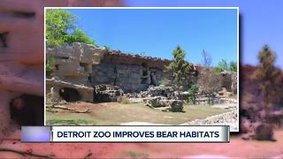 Detroit Zoo more than doubles space for 3 rescued grizzly bears
