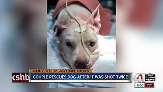 Couple rescues dog shot twice, left for dead - Video