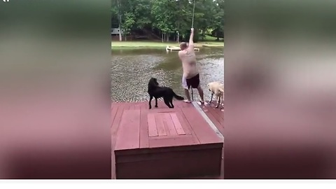 Loyal Dogs Become Worried When Owner Jumps Into Lake