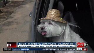 Safety tips when you bring your pet on a road trip