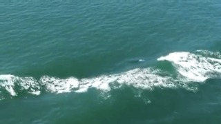 Amazing Video Shows Orcas 'Surfing' A Ship's Bow Wave - Video