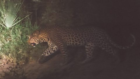 Leopard caught on camera for the first time in 14 years after National park was struck by war