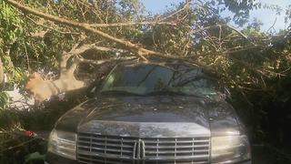 Tree falls on truck in Boynton Beach - Video