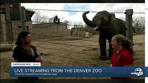 Bringing the Zoo to You: Virtual safari at the Denver Zoo