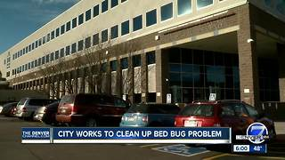 City addressing bed bug reports in Denver Human Services building - Video