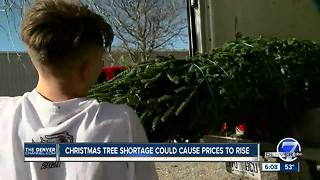 Christmas tree shortage could cause prices to rise - Video