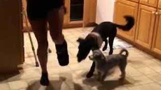 Loyal Canines Hop Alongside Injured Owner Trying To Comfort Her - Video