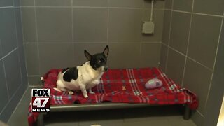Dog needs a new home after owner passes away