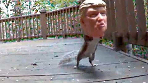 Fake nuts! Hungry squirrel gets head into Donald Trump shaped feeder