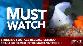 Stunning footage reveals 'smiling' snailfish filmed in the Mariana Trench - Video