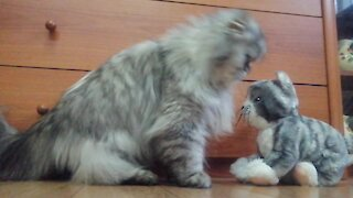 Cat has weird obsession with stuffed animal lookalike