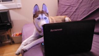 Mishka the Talking Husky uses Skype to call her canine friend - Video