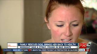 Hello humankindness: local family rescues stray dog