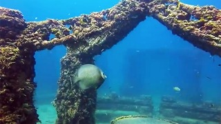 The Neptune Memorial Reef Is A Florida Attraction That is Unusually Beautiful - Video
