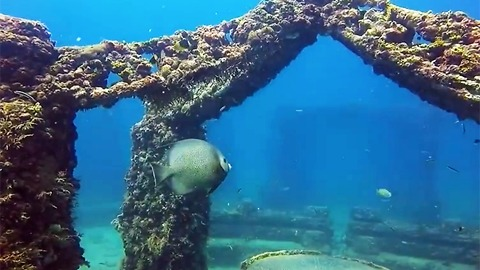 The Neptune Memorial Reef Is A Florida Attraction That is Unusually Beautiful