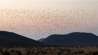 Massive Swarm of Birds Gather in Stunning Setting - Video