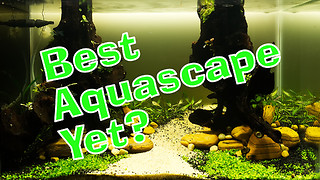New Aquascape - Best one yet?  - Video