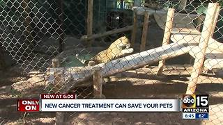 A new form of cancer treatment may be able to save your pets - Video