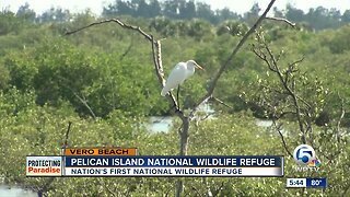 Pelican Island: The first National Wildlife Refuge