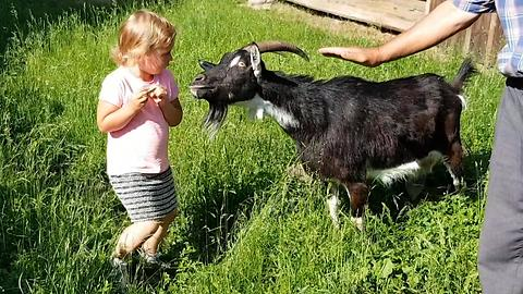 Little Polish Girl Fears Feeding Goat