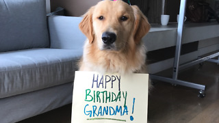 Puppy sends heart melting birthday wishes to Grandma   - Video