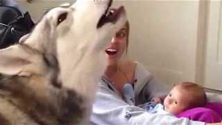 Siberian Husky helps sing lullaby for baby