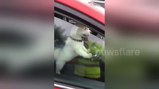 Dog honks horn after owner takes too long at McDonald's - Video