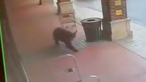 Bear Attempts to Wander Into Connecticut Liquor Store