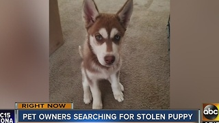 Pet owners searching for possible stolen puppy near 35th and Southern avenues - Video