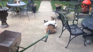 Bunny Bounces Around A Bored Dog - Video