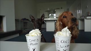 Obedient Canines Adorably Feast On Delicious Puppuccino Treats