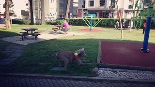 Dog catches tennis ball in slow motion