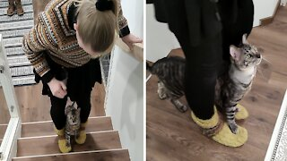 Very talented cat performs amazing stairs trick