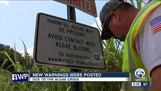 Algae warning signs posted in Martin County