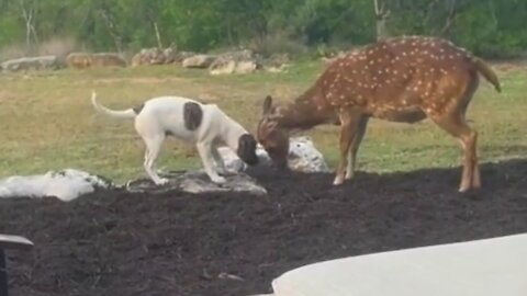 Deer and dog are the very best of friends
