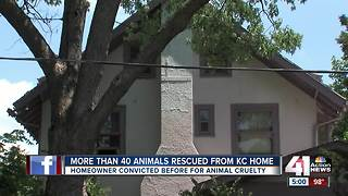 More than 40 animals rescued from KC home - Video