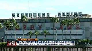 Florida voters could decide greyhound racing track's future - Video